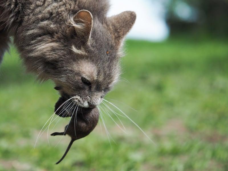 Katze Taurin Katzenfutter
