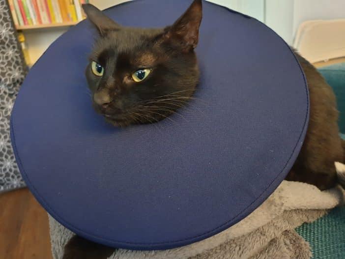 Tepaw Alternative Halskrause Katze