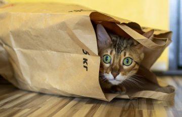 Typische, skurrile Verhaltensweisen von Katzen