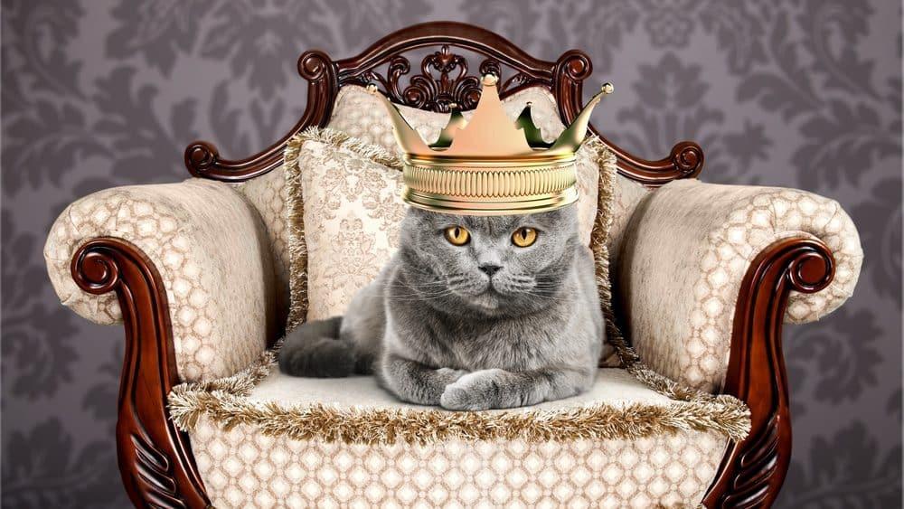 """Die Katze ist König: Klischee über Katzen, die ihren Menschen als """"Personal"""" ansehen"""