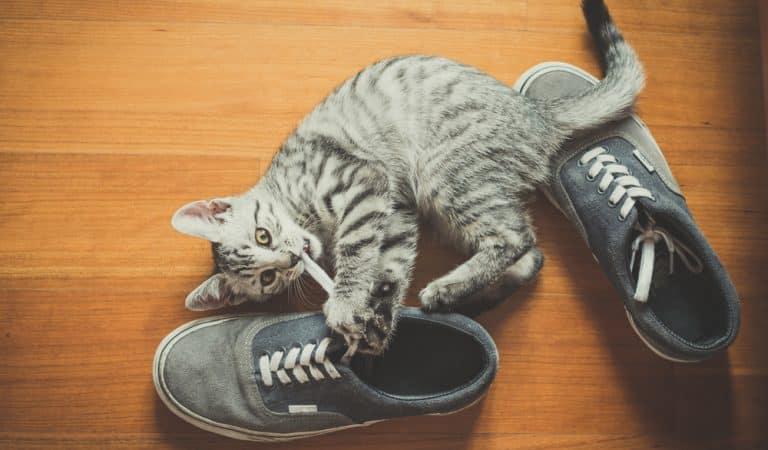Rätsel gelöst: Darum lieben Katzen Schuhe