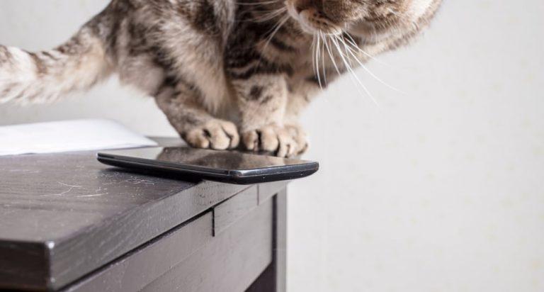Warum werfen Katzen alles runter?