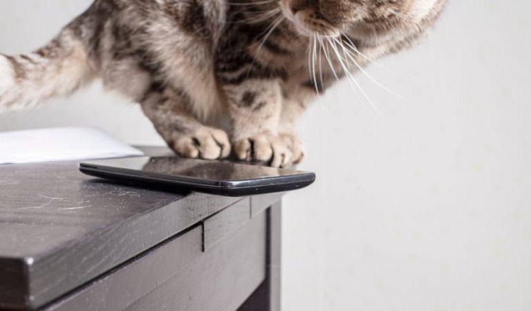 Warum werfen Katzen gerne Gegenstände runter?