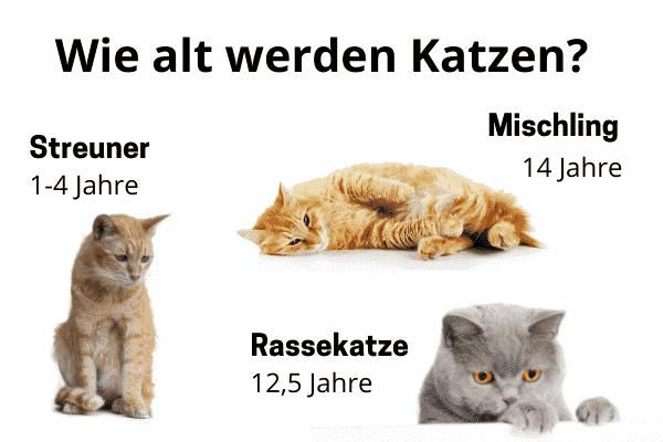 Wie alt werden Katzen Statistik