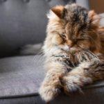 Wie alt werden Katzen im Durchschnitt