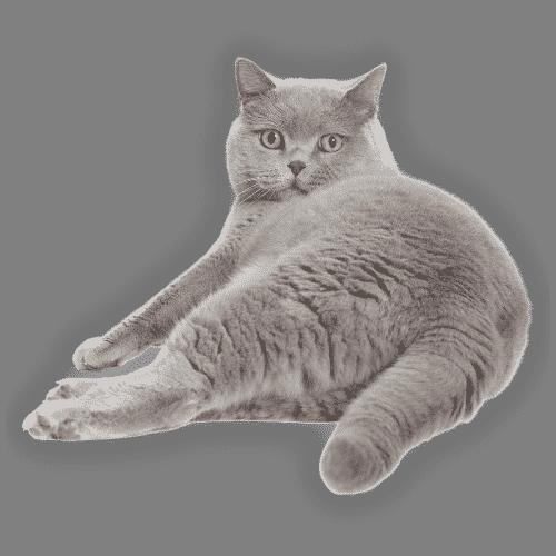 Wie lange leben Katzen?