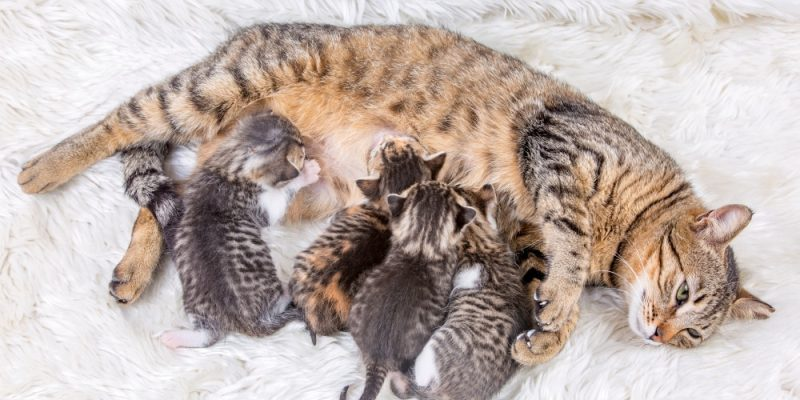 Kitten Ernährung Muttermilch