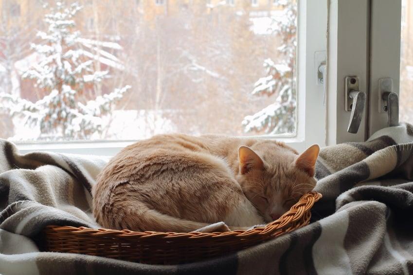 Katze Winter frieren