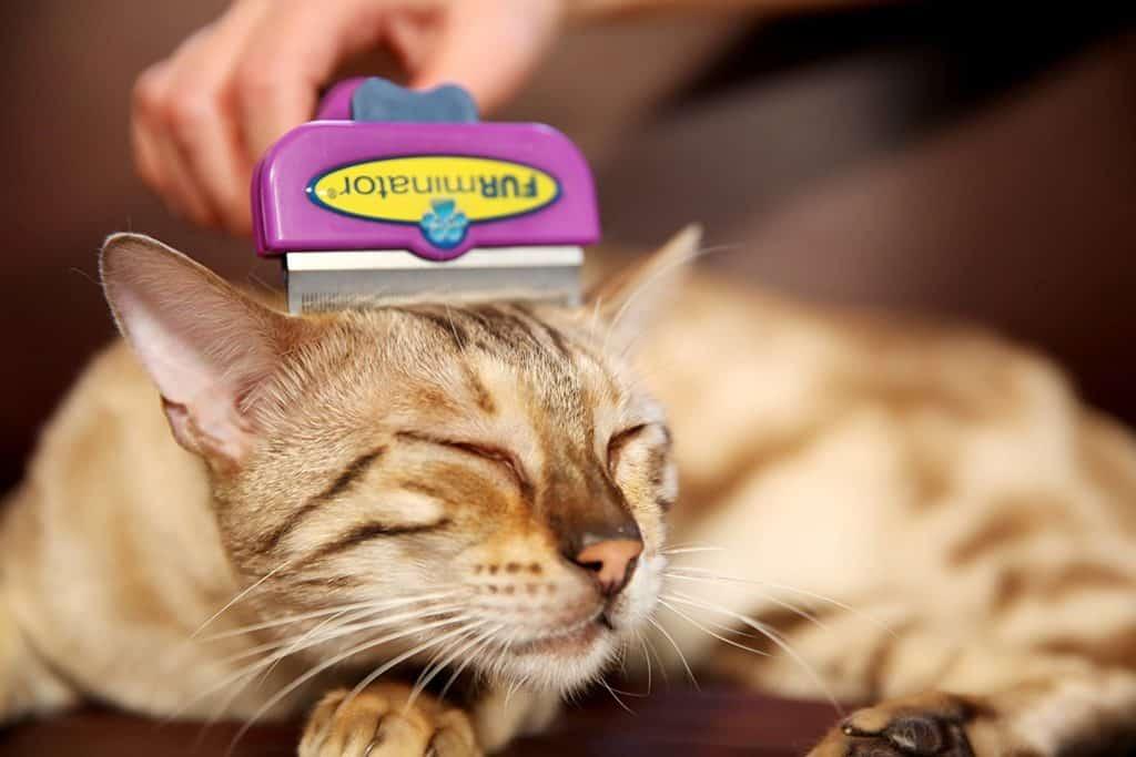 Katzenhaare entfernen bürsten