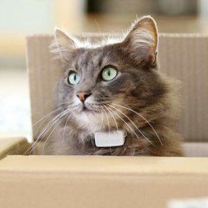 Miaufinder Peilsender Katze