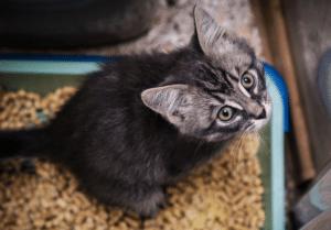 gew hnung an das katzenklo so bekommst du eine katze stubenrein. Black Bedroom Furniture Sets. Home Design Ideas