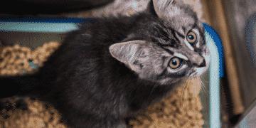 Katze ans Katzenklo gewöhnen